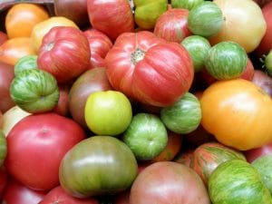 growing tomatoes from seed in a home garden