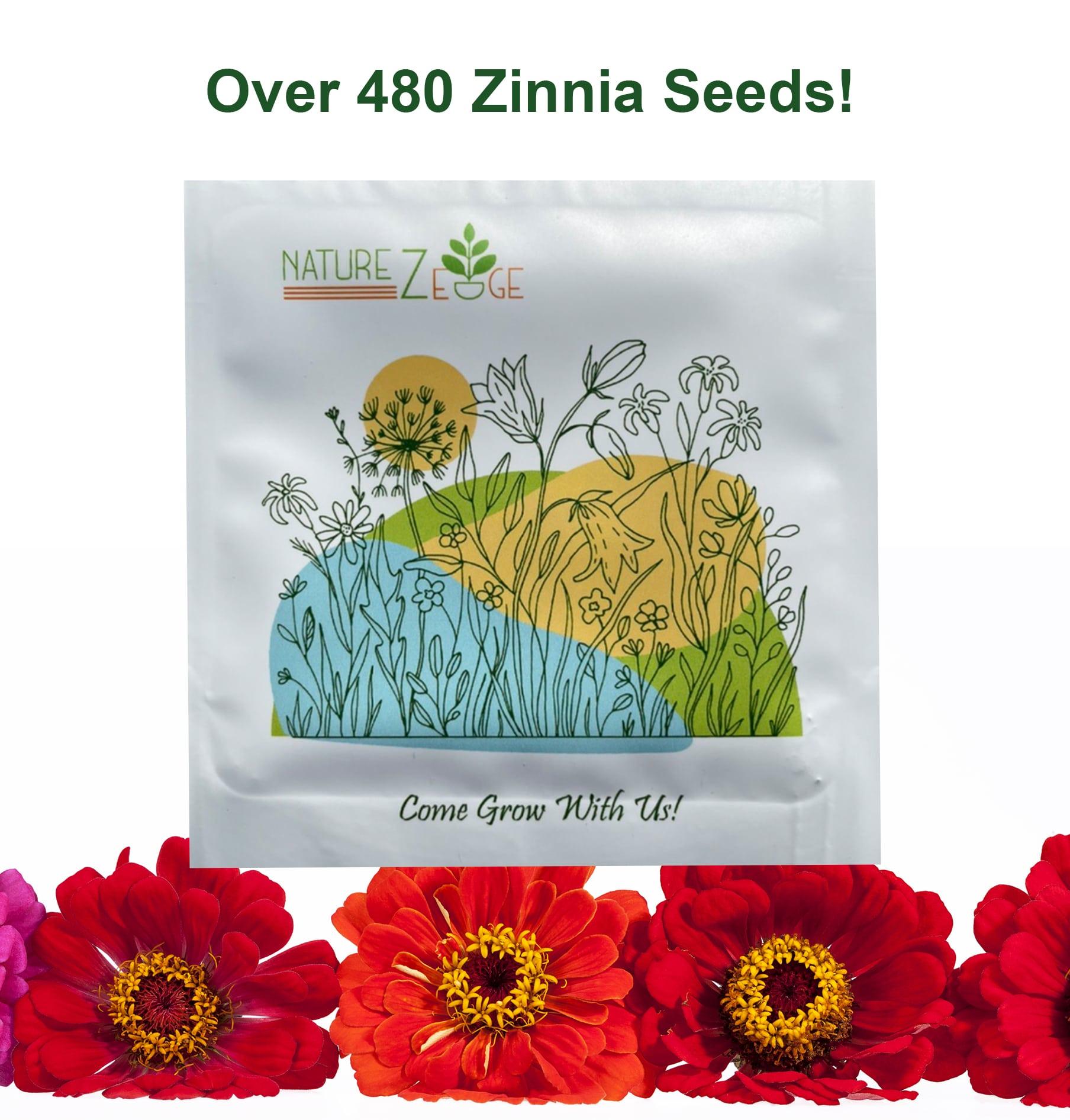 Zinnia Seeds for Planting Outdoors, 480 Seeds, Zinnia Elegans, 4.2 Grams