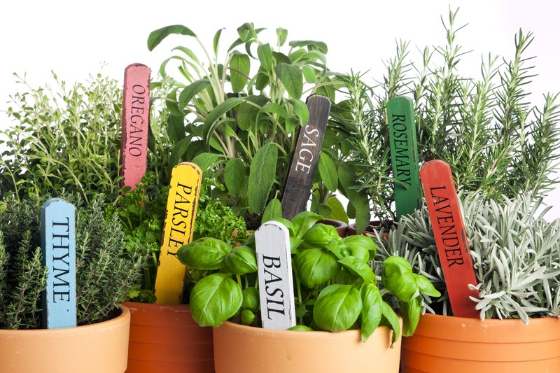 The best herbs for a container herb garden