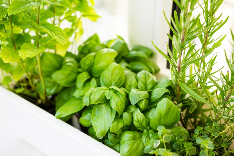 Container Herb Gardens