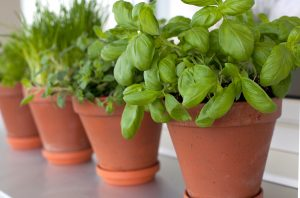 Tips to Start Growing Herbs in Pots and Containers