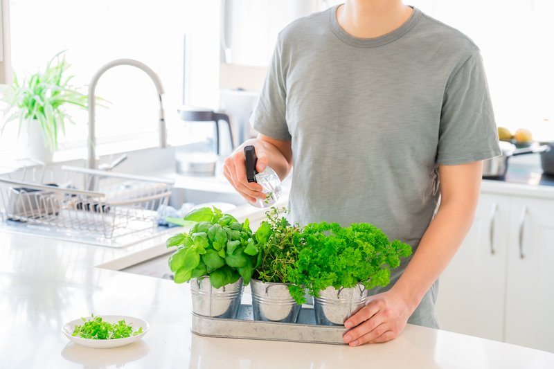 Watering herbs indoors