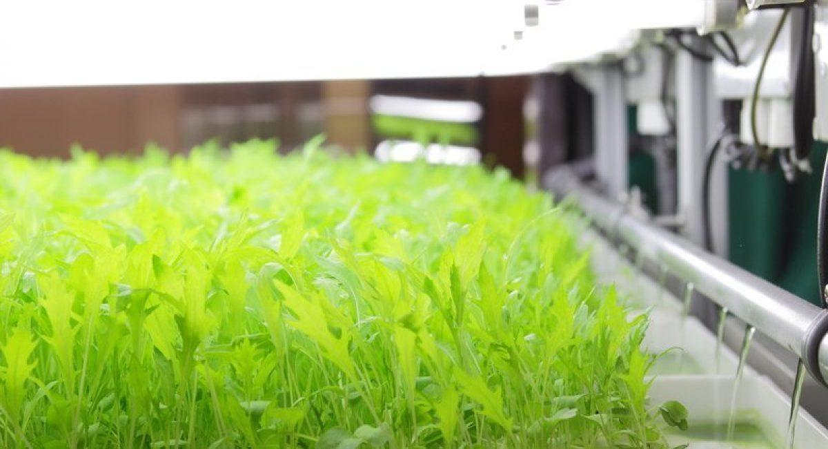 Drip system hydroponic