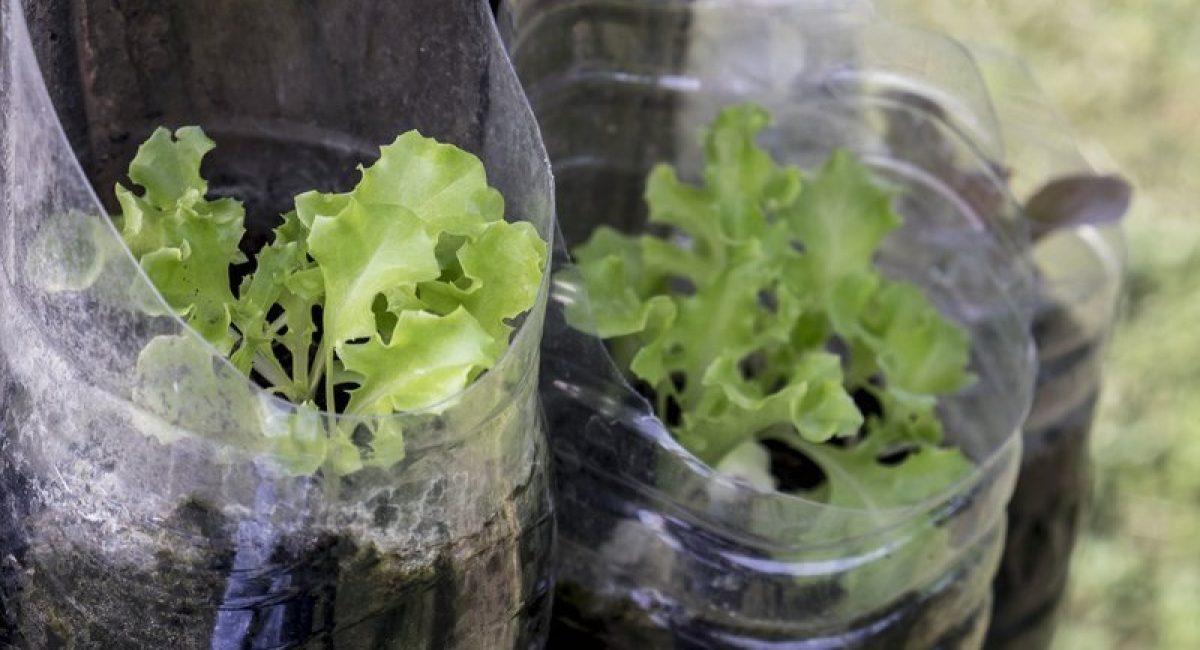 Wick System hydroponic