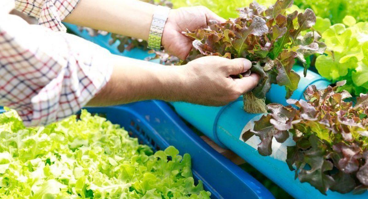 home hydroponic garden